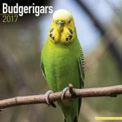 Budgerigars Calendar 2017