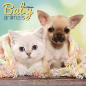 Baby Animals Calendar 2017