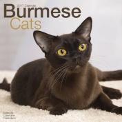 Burmese Cats Calendar 2017