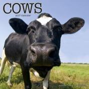 Cows Calendar 2017