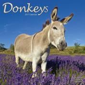 Donkeys Calendar 2017