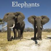 Elephants Calendar 2017