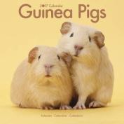 Guinea Pigs Calendar 2017