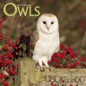 Owls Calendar 2017