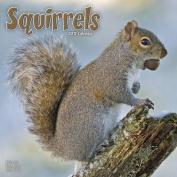 Squirrels Calendar 2017