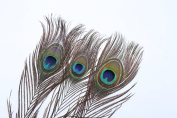 DECORA 100-Pieces Real Natural Peacock Feathers