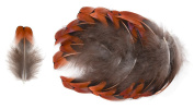 Ring-necked Pheasant Breast Feathers (20 Pieces), Bronze with Black Tips