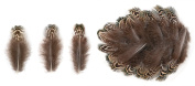Ring-necked Pheasant Lower Back Feathers (20 Pieces), Black and White Mottled with Yellow Green and Brown Tips