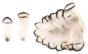 Lady Amherst Pheasant Neck Feathers (20 Pieces), Ivory and Black Striped
