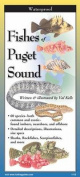 Fishes of Puget Sound