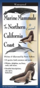 Marine Mammals of Northern & Central California