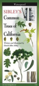 Sibley's Trees of California