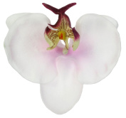 Phalaen (Phalaenopsis) Orchid Foam Flower Black Alligator Hair Clip, 6.1cm Long (Clip Only), White-Lavender