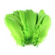 Celine lin 100PCS Dyed Home Decor Goose Feather For Art,Home Party or Wedding 15cm - 20cm ,Grass Green