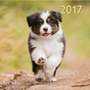 A&I Dogs 2017