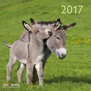 A&I Donkeys 2017