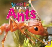 Ants (Science Kids