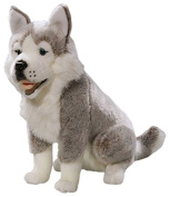 Toizz 33.56092 37 cm BIColini Sitting Husky Dog Plush Toy