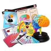 Eastcolight 29961 Brain Professional Set
