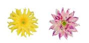 2 Pcs Girl's Big Gerbera Hair Clip and Hair Pin Hat Decoration Flower