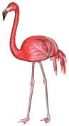 Flamingo Set of 4 Temporary Tattoos
