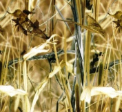 Hydrographic Film - Water Transfer Printing - Hydro Dipping - Reeds Camo - 1 Sq. Metre