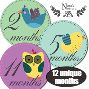Vintage Birds Baby Monthly Stickers - Shower Gift or Scrapbook Photo Keepsake
