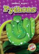 Pythons (Snakes Alive)