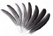 Eagle Feather,Hgshow 10pcs Imitation 25cm - 30cm Rare and precious feathers
