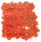 Pressed flowers, dark orange Daffodils 40 pieces, art craft materials, card making, scrapbooking
