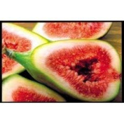 Wild Fig & Cassis (J.Malone)*- 2351 - Candle & Soap Fragrance Oil - 1 Oz (30 ml) - High Performance Supplie - Special Promotion.