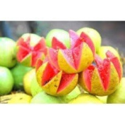 Pink Guava Amazonian Fruity - 1794 - Candle & Soap Fragrance Oil - 1 Oz (30 ml) - High Performance Supply - Special Promotion.