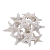 Outus 10 Pack White Natural Armoured Starfish Wedding Seashell Craft, 2.5 to 8.9cm