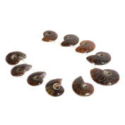 Justinstones 10pcs Side Drilled Natural Whole Ammonite Fossil Loose Gemstone Beads