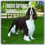 English Springer Spaniels 2017 Square