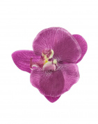 Zac's Alter Ego® Orchid on Concord Clip & Brooch Pin