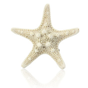 Bigban 1 PC Europe Fashion Women Lady Girls Pretty Natural Starfish Star Beige Hair Clip New