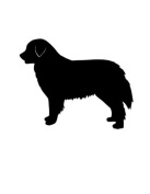Pack of 3 Burnese Mountain Dog Stencils Made from 4 Ply Mat Board 11x14, 8x10, 5x7