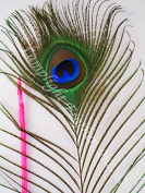 50 pc, Peacock Feathers, Stem Dyed, MANY colours OPTIONS, Natural Eye, 80cm - 90cm , per 50