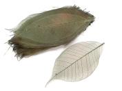 Cyan Green Skeleton Leaves 10cm Natural Colour Flower Making Natural Rubber Leaves
