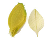 Yellow Green Skeleton Leaves 10cm Natural Colour Flower Making Natural Rubber Leaves