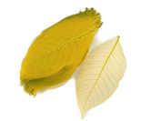 Yellow Skeleton Leaves 13cm Natural Colour Flower Making Natural Rubber Leaves