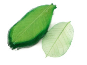 Dark Green Skeleton Leaves 13cm Natural Colour Flower Making Natural Rubber Leaves
