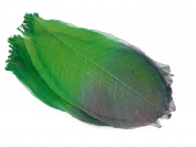 Green Blue Skeleton Leaves 20cm Natural Colour Flower Making Natural Rubber Leaves
