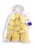 Constantia Beauty 12 Pack Natural Sea Silk Sponges 3.8cm - 7.6cm Sizes for Cosmetic Use