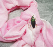 VINTAGE REAL BUG JEWEL BEETLE INSECT BROOCH PIN GREEN GOLD NEW