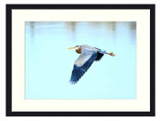 Great Blue Heron - Solid Wood Picture Frame Art Print