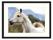 White arabian horse - Solid Wood Picture Frame Art Print