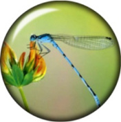 Snap button Dragonfly Flower 18mm Cabochon chunk charm