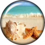 Snap button Beach Sea starfish Conch Shell 18mm Cabochon chunk charm
